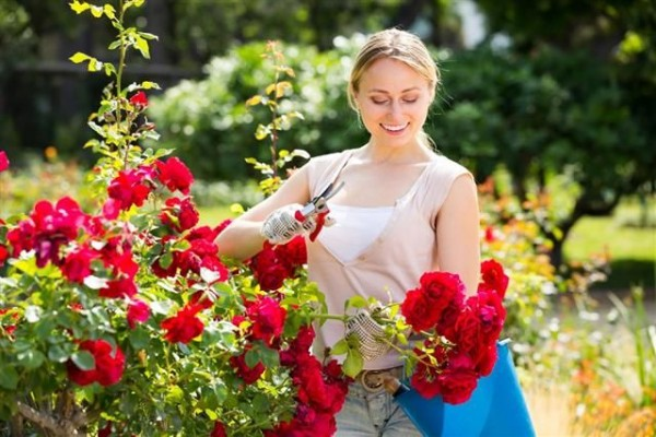 Tahukah Kamu Beberapa Bunga Cantik Ini Dapat Dibuat Menjadi Teh?