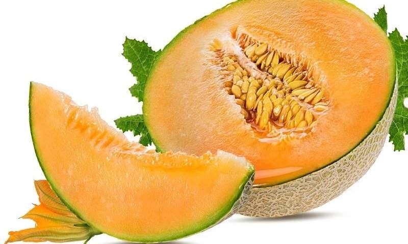 Perokok Wajib Baca, Berikut Manfaat Buah Melon